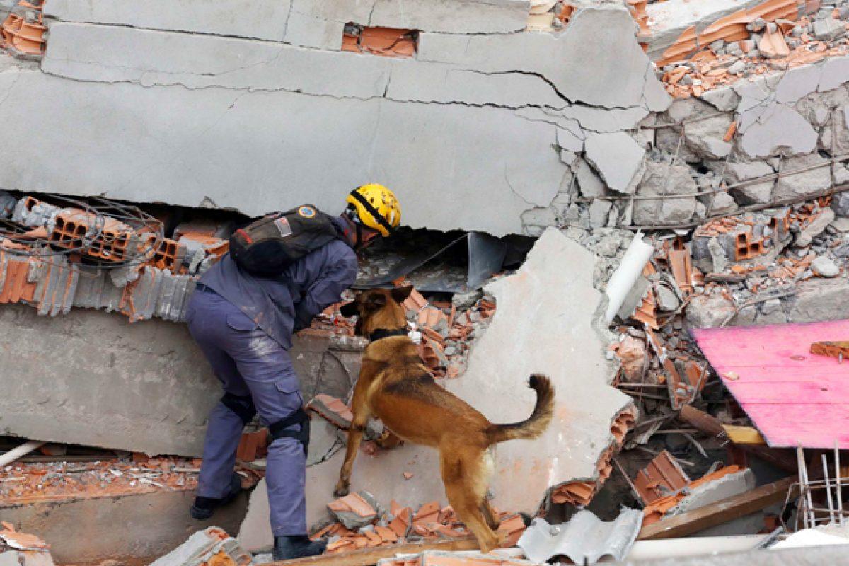 Cães também ajudaram nos resgates | Nacho Doce/ Reuters
