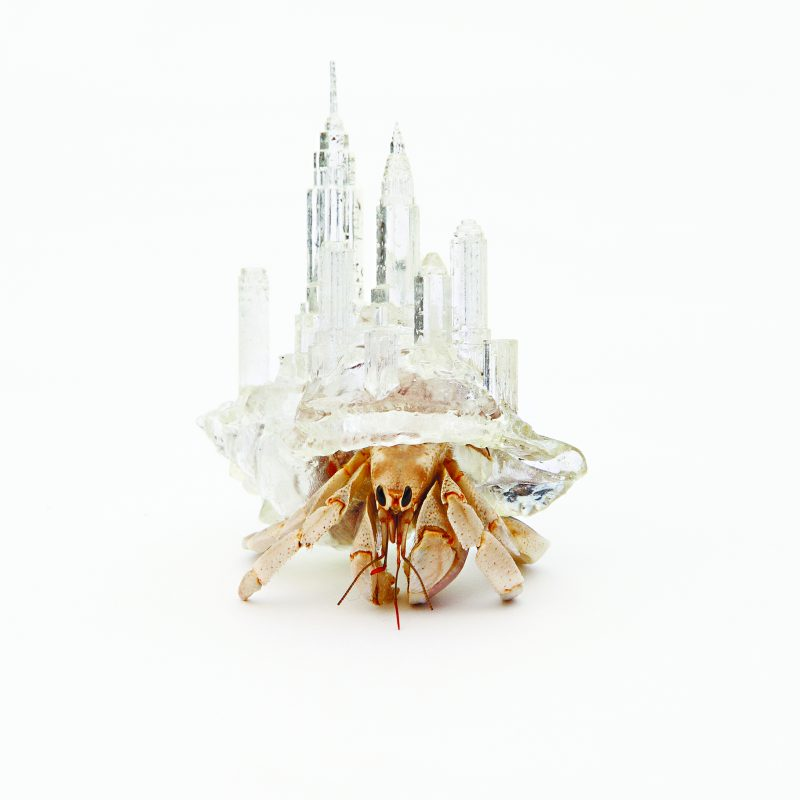 20130813_SP10_crustaceo1 ny. Imagen Por: This hermit crab shell is modeled on the skyscrapers of Manhattan, New York City. The work belongs to Aki Inomata