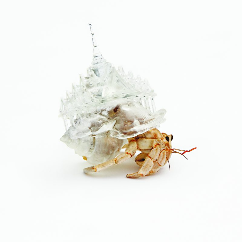 20130813_SP10_crustaceo2 bangcoc1. Imagen Por: This hermit crab shell is modeled on a Buddhist temple in Bangkok, Thailand. The work belongs to Aki Inomata