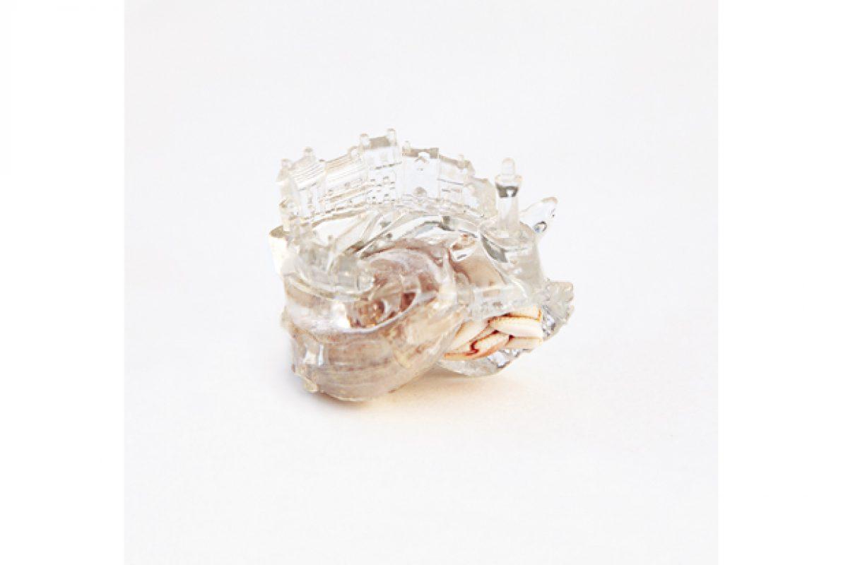 crustaceo4-frança