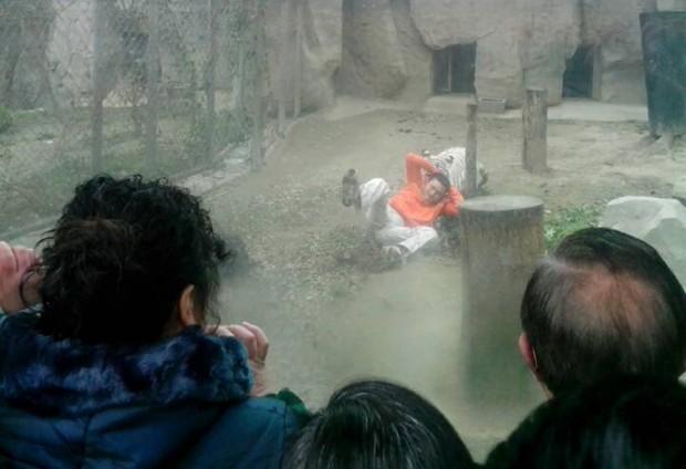 Homem é atacado por tigre em zoo de Chengdu, na China   China Daily/Reuters