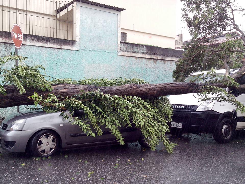 Árvore caída sobre os carros na rua Alto do Bonfim, na região da Vila Santa Catarina | Sandro Araújo/Ouvinte SulAmérica Trânsito