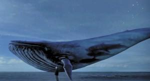 Baleia azul é o símbolo do jogo que induz participante à morte | Reprodução da internet