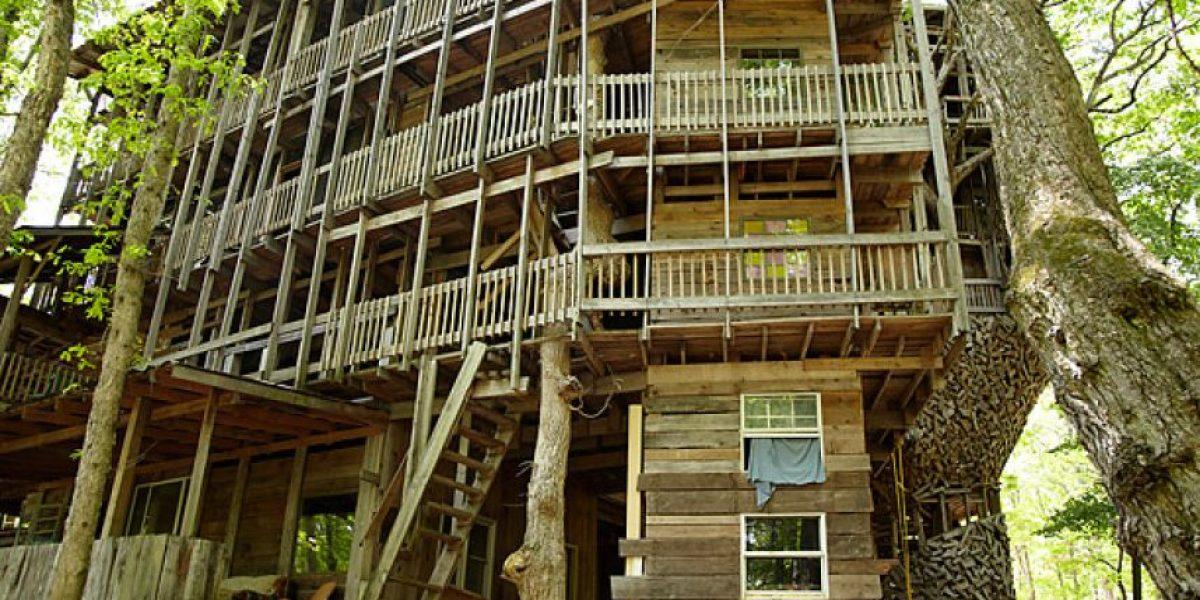 La casa en el árbol más grande del mundo está en Estados Unidos