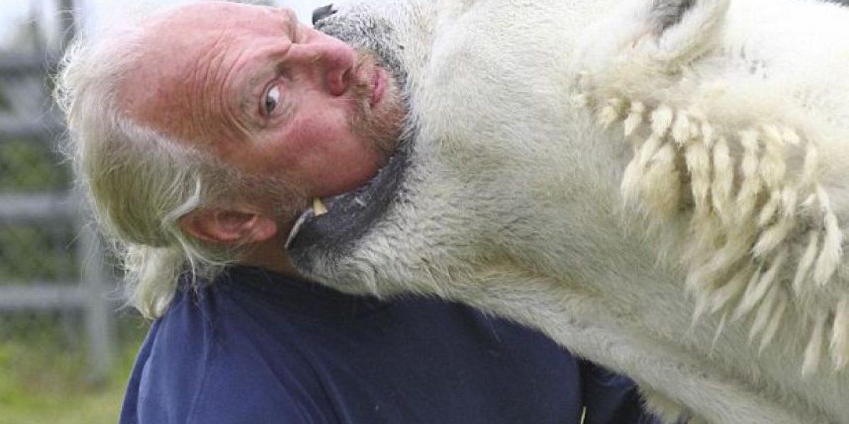 Impactantes fotos del único hombre que puede tocar un oso polar
