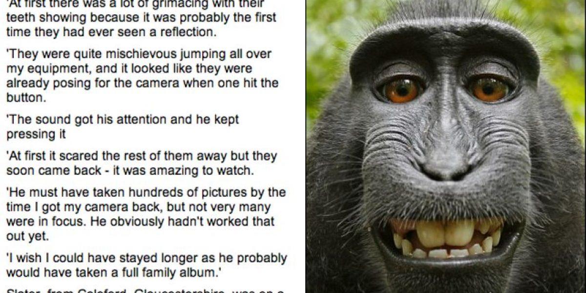 Fotógrafo asegura que unos macacos se tomaron estas fotos