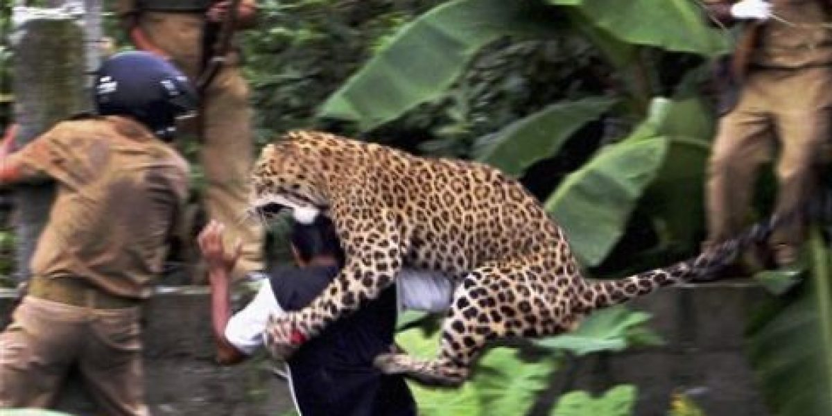 [FOTOS] Sorpresivo ataque de un leopardo deja seis heridos