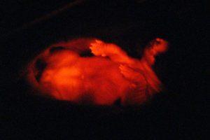 Foto:newscientist.com. Imagen Por: