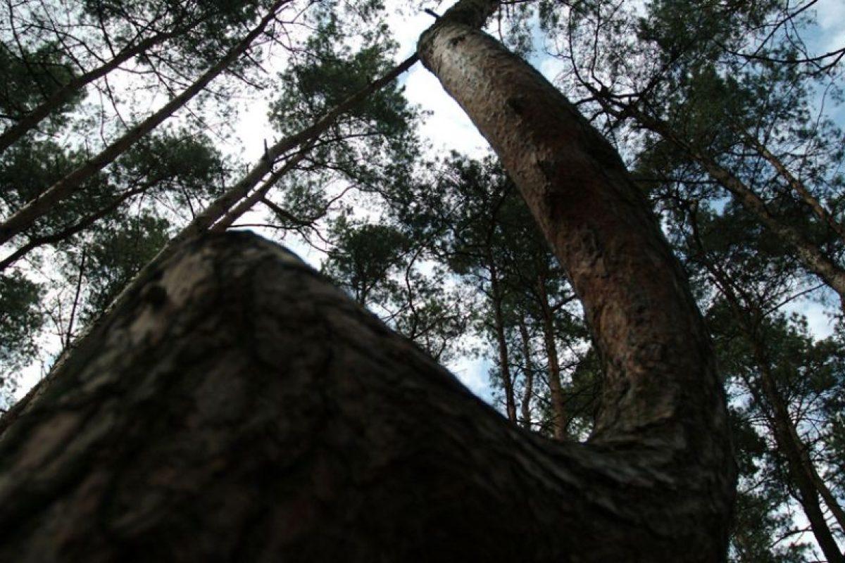 Foto:discovery.com. Imagen Por: