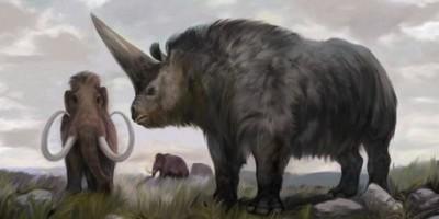 Hallan restos de un rinoceronte prehistórico en el sur de Rusia