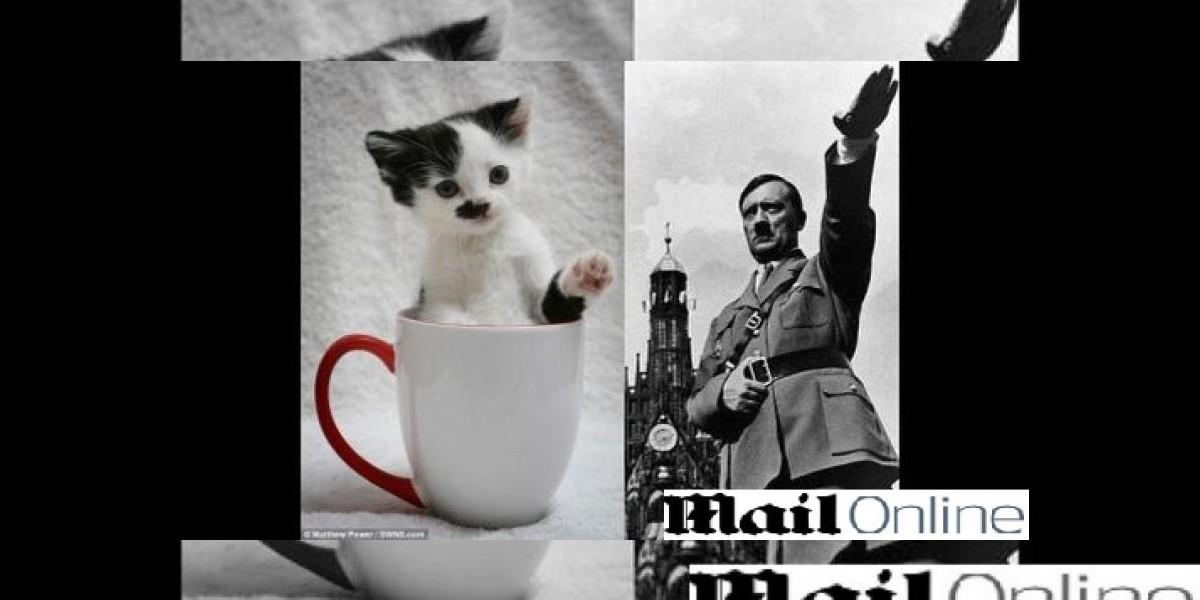 Este gatito es rechazado por su parecido a Hitler
