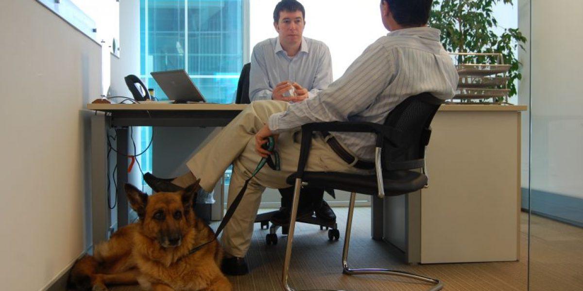 Mascotas van a la oficina