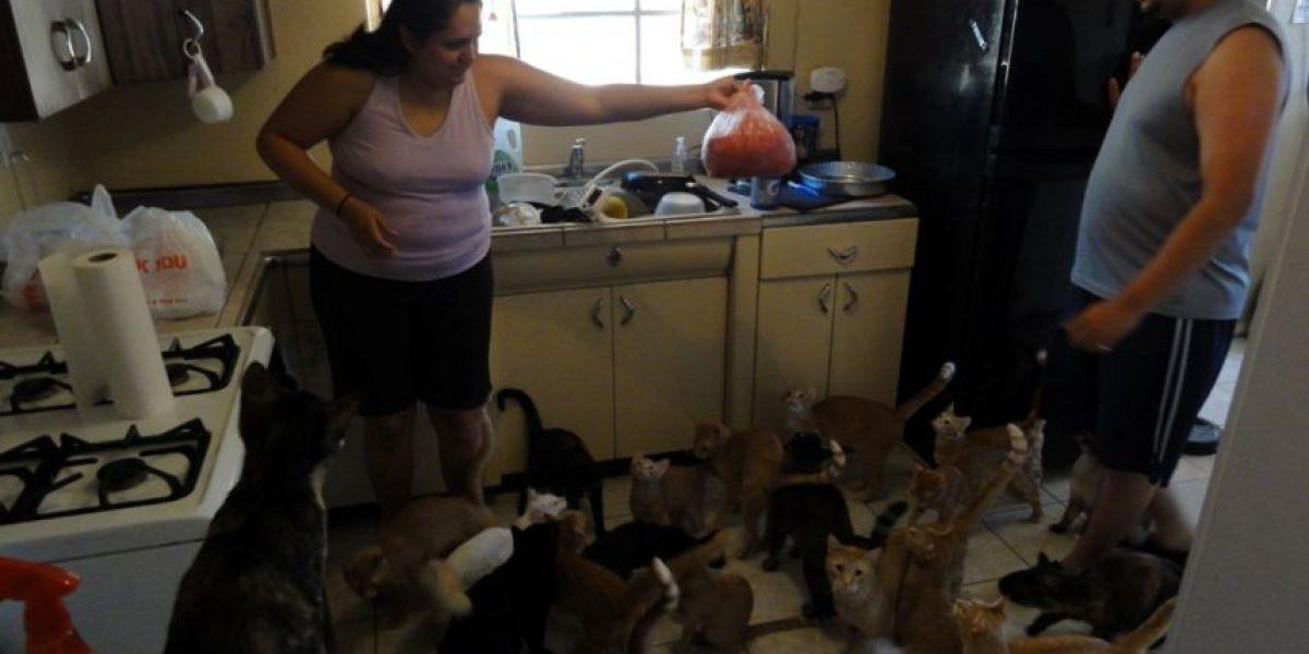 Familia vive con 50 gatos
