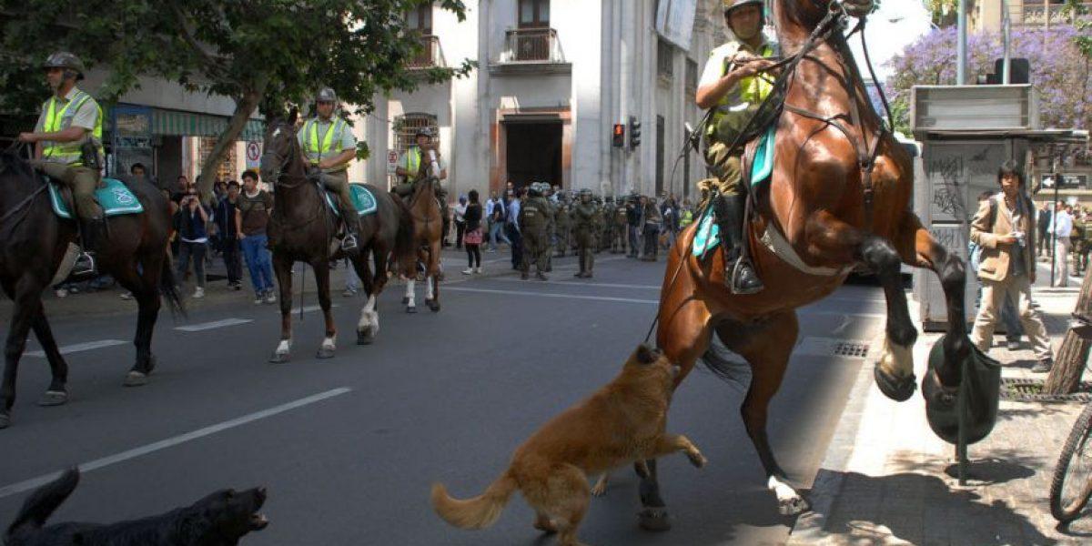 [FOTOS] Perro muerde a caballo de Carabineros en marcha estudiantil de Santiago