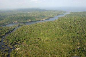 Selva Amazónica, Brasil Foto:EFE. Imagen Por: