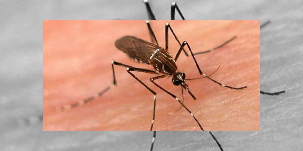 Por qué los mosquitos pican sólo a algunas personas