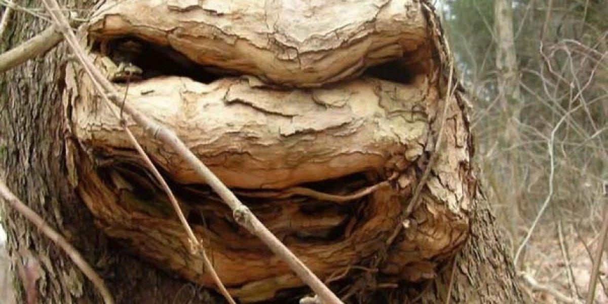[FOTO] Dicen que este árbol