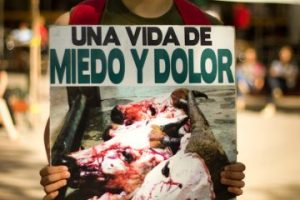 Una de las imágenes con que EligeVeganismo busca sensibilizar al público respecto al maltrato y la matanza de animales. Foto:EligeVeganismo. Imagen Por: