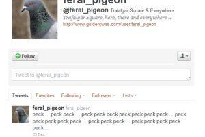 10.- @feral_pigeon: Otro animal en la red de microbloggin es esta paloma que tuitea las onomatopeyas de todo lo que hace. Foto:Reproducción. Imagen Por: