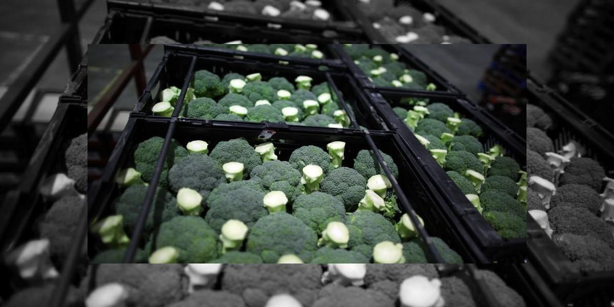 Brócoli, una hortaliza útil para controlar el peso