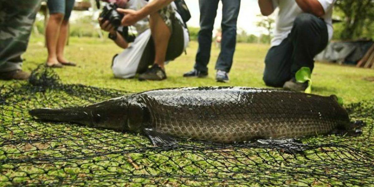 [FOTOS] Conoce un santuario de aves, caimanes y peces prehistóricos