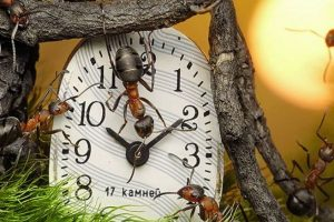 Foto:Andrey Pavlov. Imagen Por: