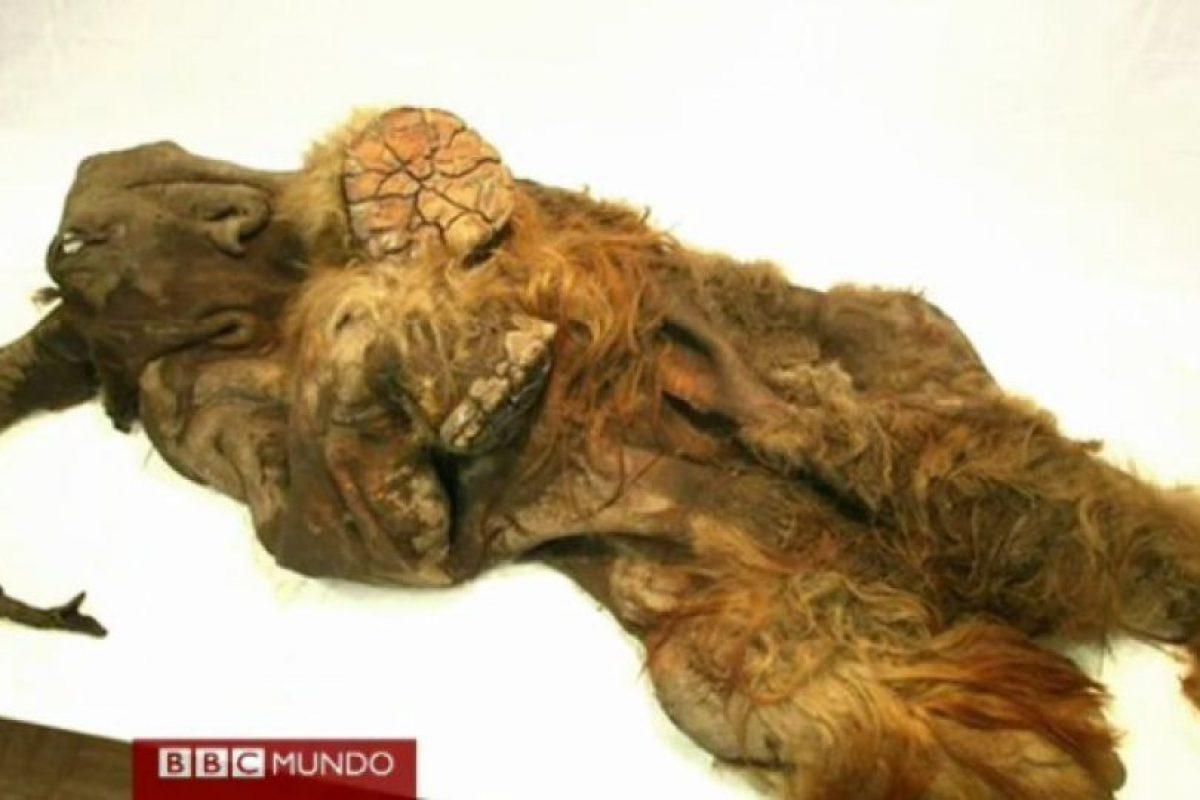 Foto:Captura BBC Mundo. Imagen Por: