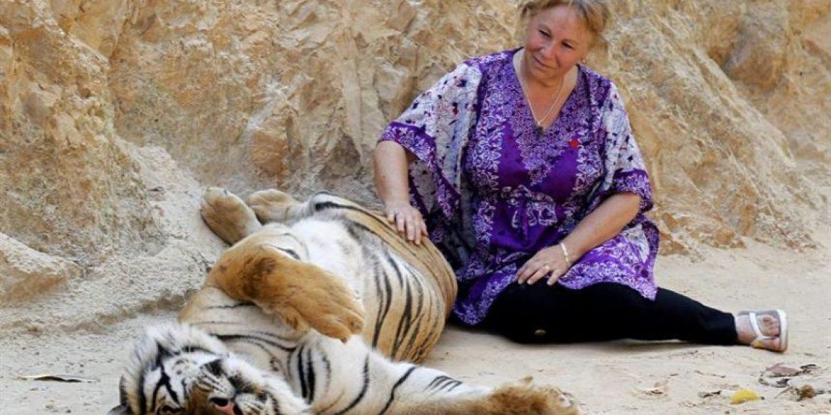[FOTOS] En este templo budista se puede tocar a los tigres