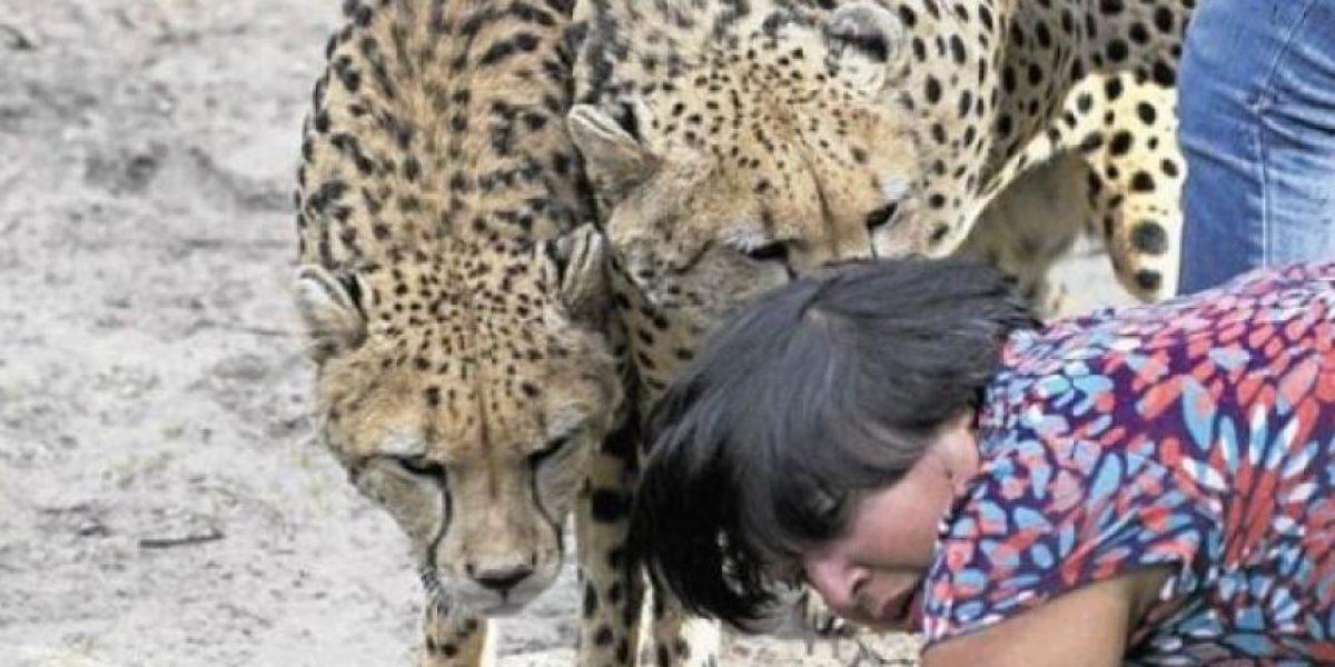[FOTOS] Mujer es atacada por leopardos mientras su marido sólo le tomó fotos