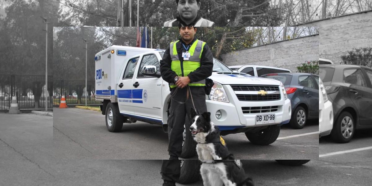 Así trabajan los perros de la PDI desde que ocupan GPS