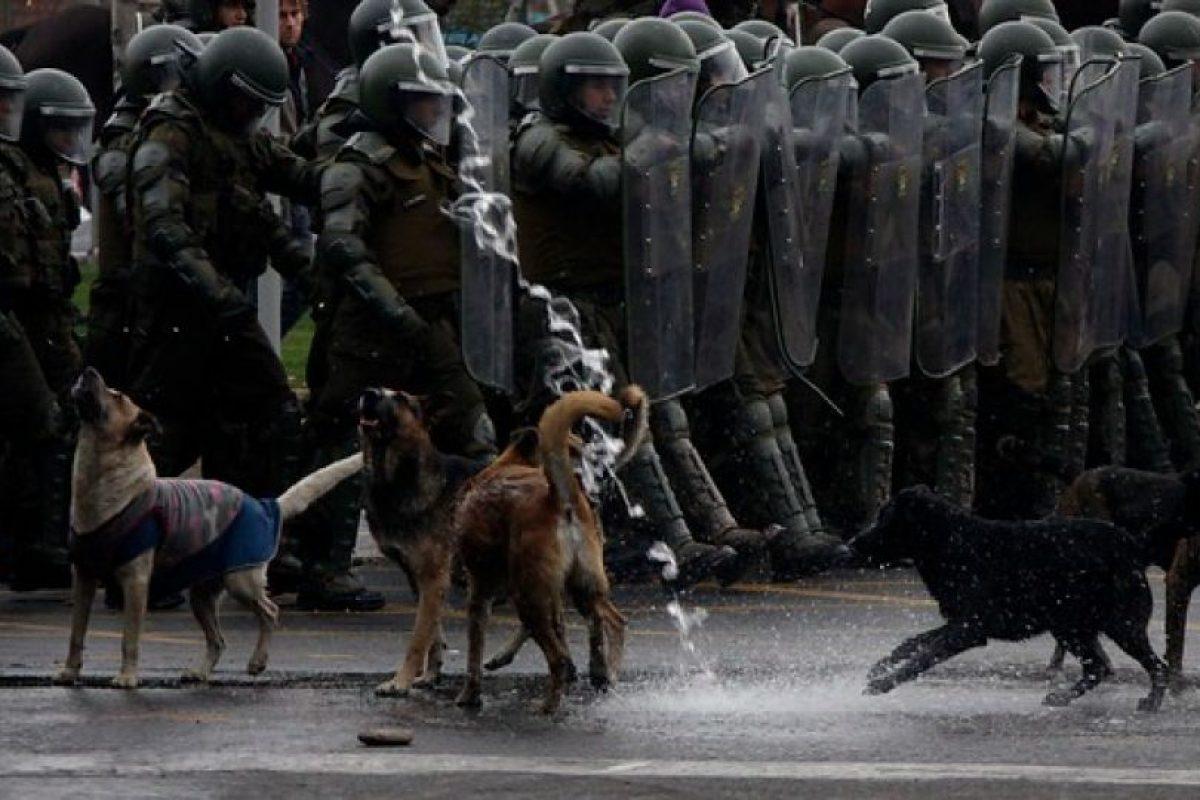 Foto:FRANCISCO SAAVEDRA / AGENCIAUNO. Imagen Por: