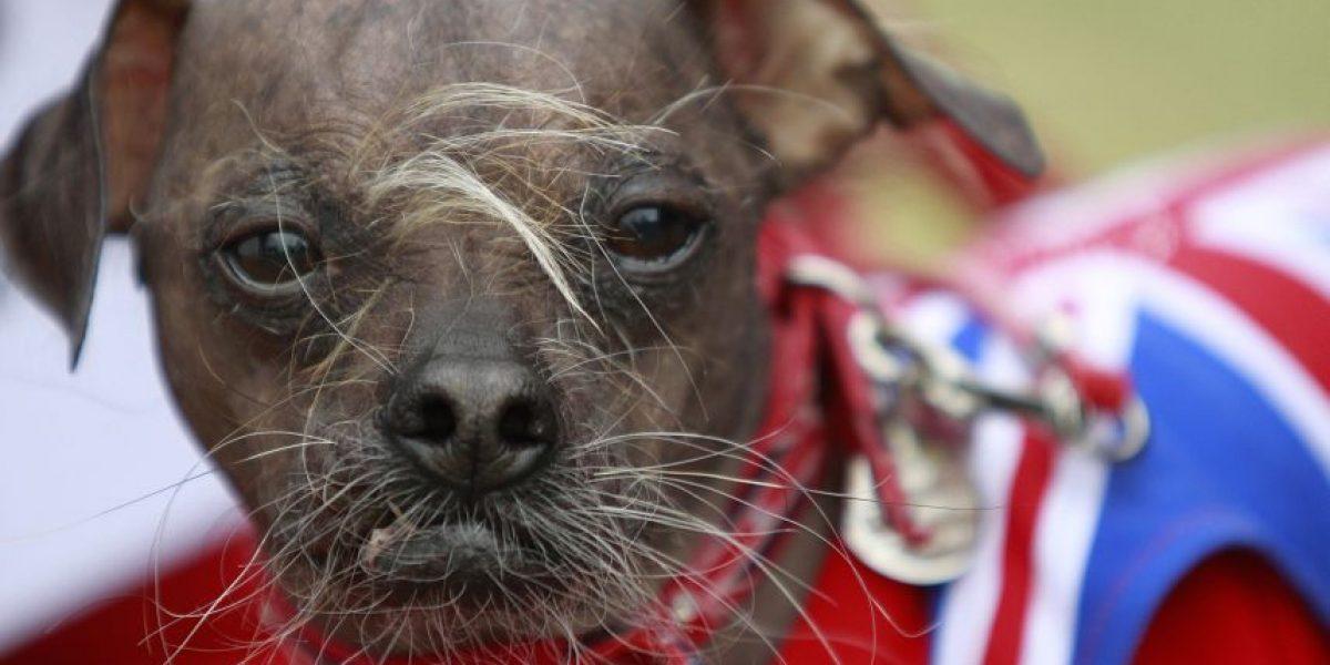 [FOTOS] Este perro fue elegido el más feo del mundo de este año