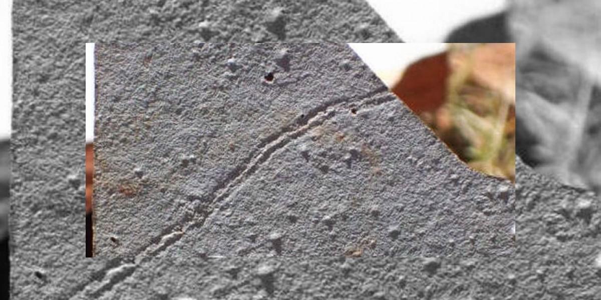 Encuentran huellas fósiles del animal más antiguo de la Tierra en Uruguay