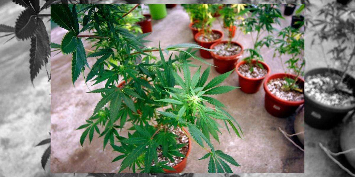 Experta devela las señales que pueden indicar el consumo de drogas en los hijos