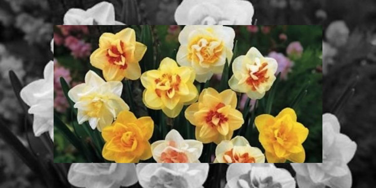 Esta es la flor que podría aliviar la depresión y enfermedades cerebrales