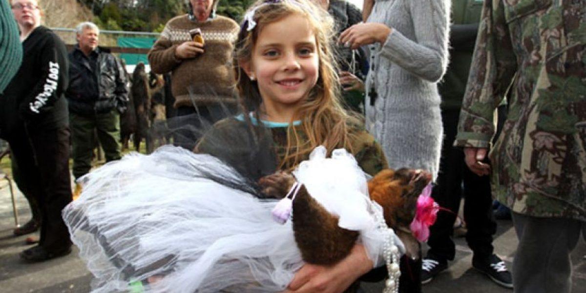 Polémico concurso infantil en Nueva Zelanda: Disfrazar zarigüeyas muertas