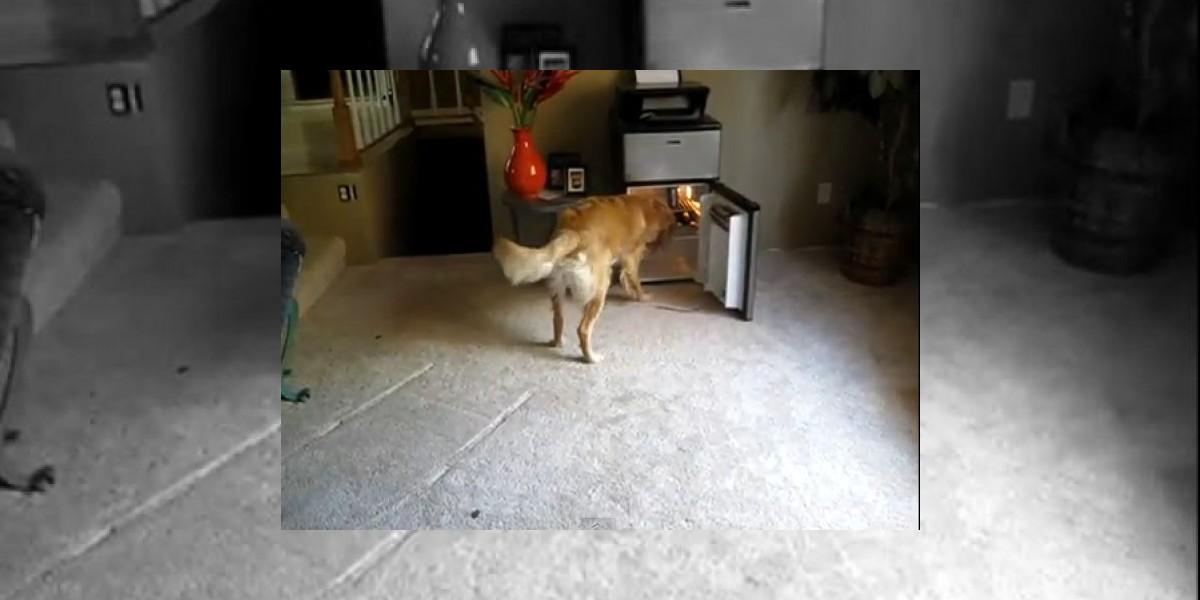 [VIDEO] Este perro es un repartidor de cervezas muy servicial