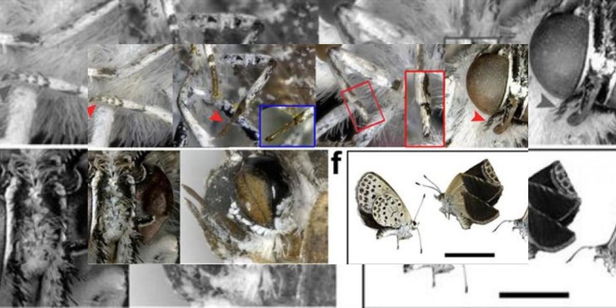 Radiación en Fukushima provocó mutaciones en las mariposas