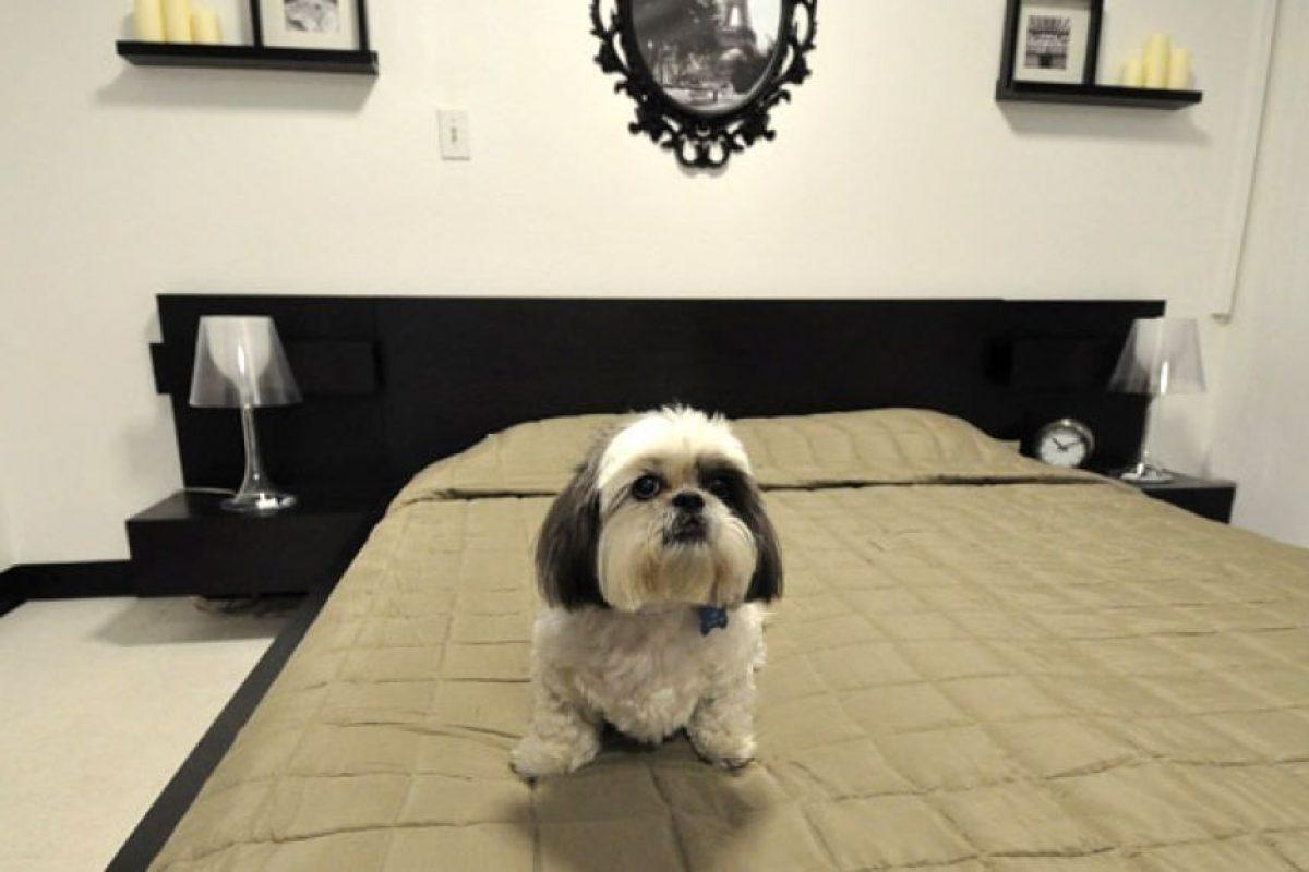 El hotel D Pet podría ser el recinto de este tipo más lujoso del mundo. Tiene confortables habitaciones que van entre los 79 y 200 dólares la noche, con amplias camas de diseño. El lugar abrirá próximamente sus puertas en el barrio neoyorquino de Chelsea, EEUU. Foto:dpethotels.com. Imagen Por: