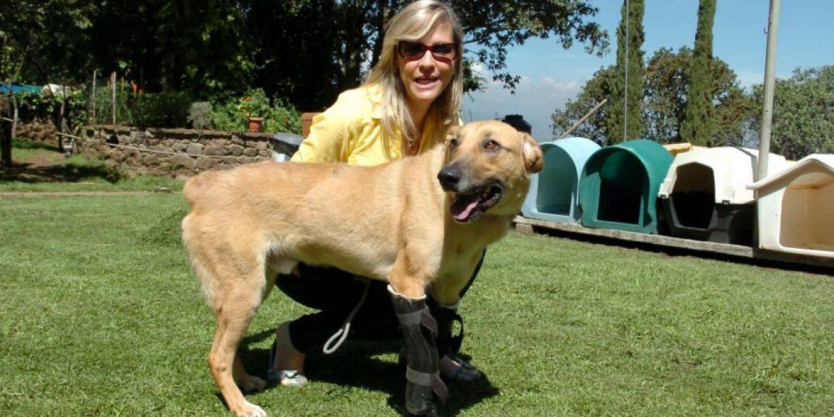 Pay de Limón: El perro torturado por criminales y que fue rehabilitado