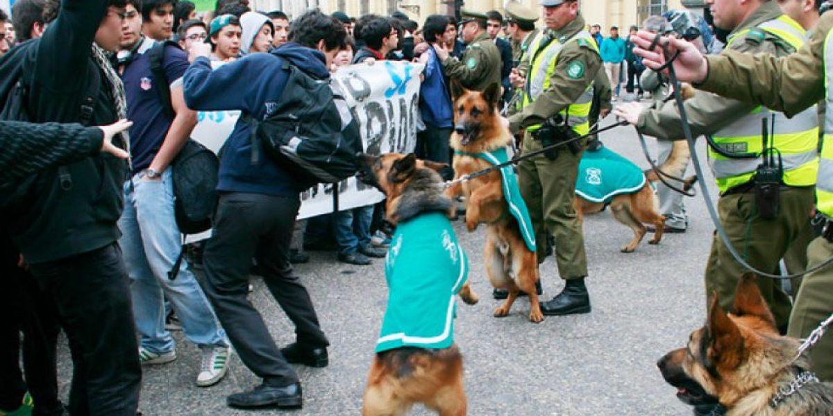 Captan a perro de Carabineros mordiendo mochila de estudiante