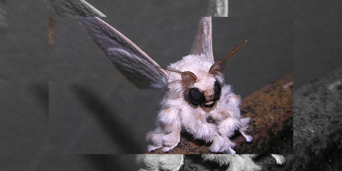 Esta foto de una polilla genera debate en Flickr