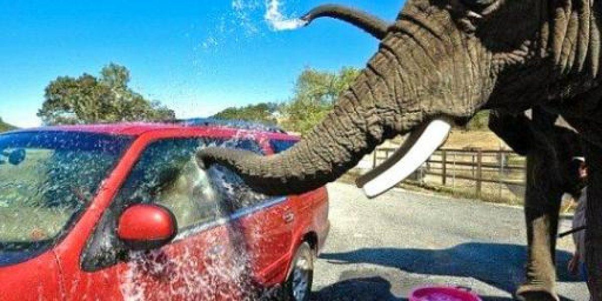 Todo lo que tienes que saber del lavado de tu automóvil