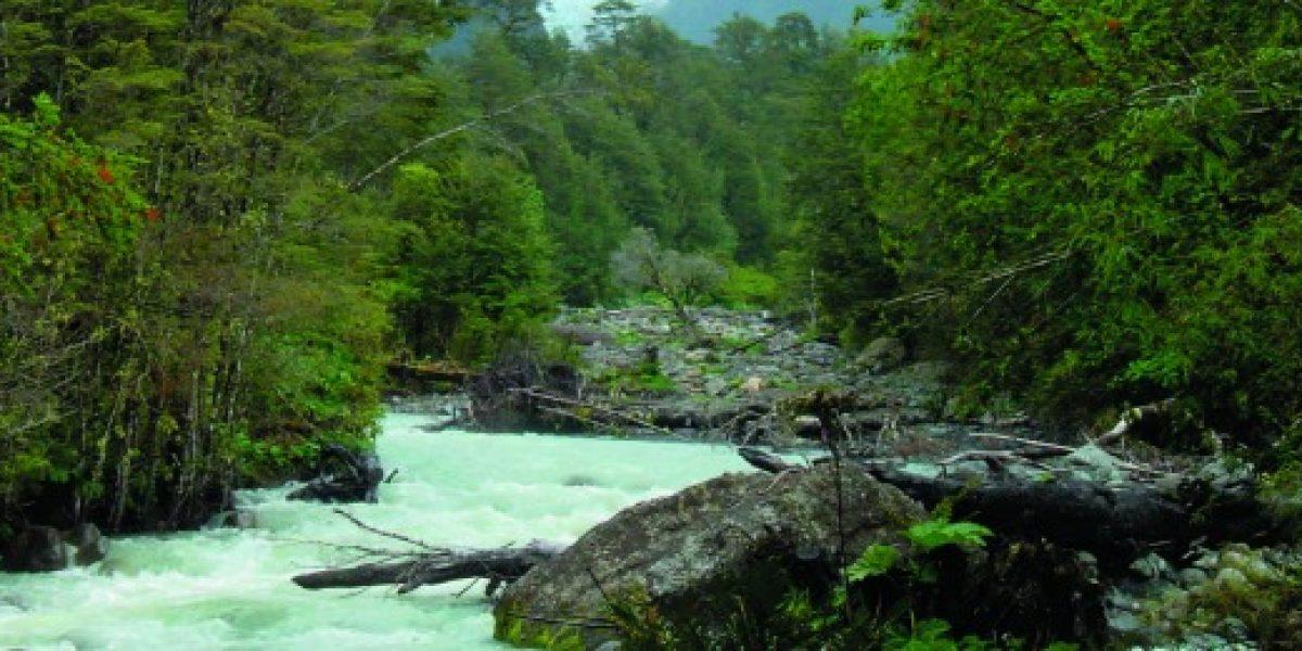 Ruta invita a disfrutar de la diversidad de los bosques en La Patagonia