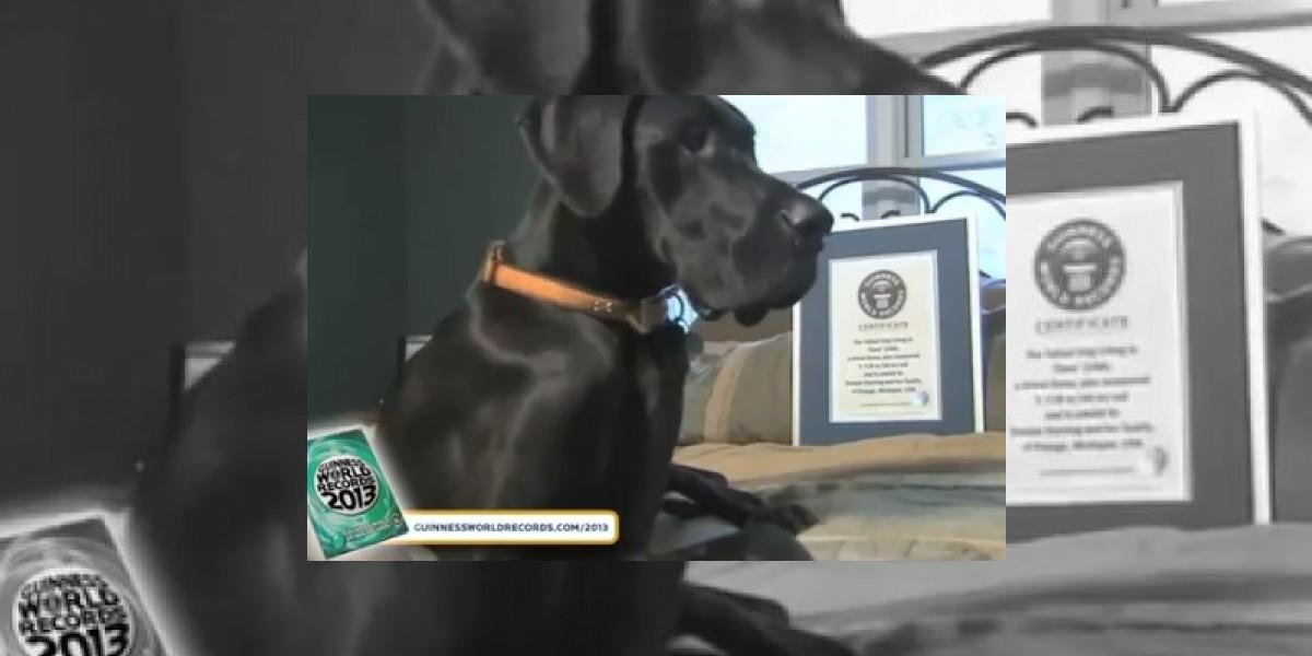 [VIDEO] Conoce a Zeus, el perro más alto del mundo