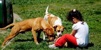 [FOTOS] Inauguran clínica veterinaria móvil en Renca