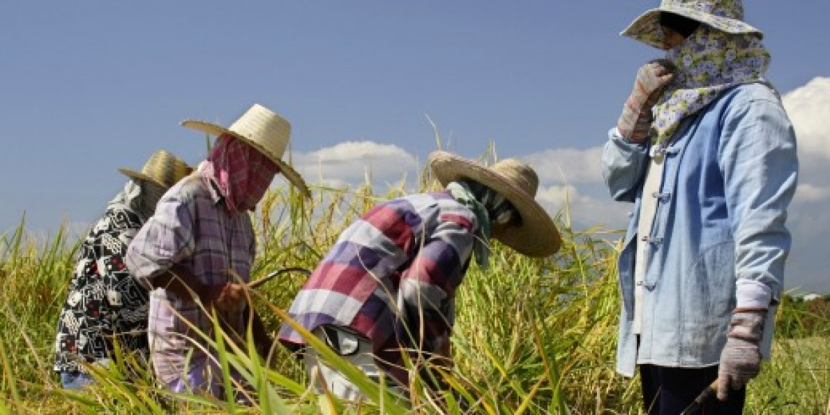 Gobierno presentará proyecto que permite ingreso de extranjeros para trabajar en agricultura
