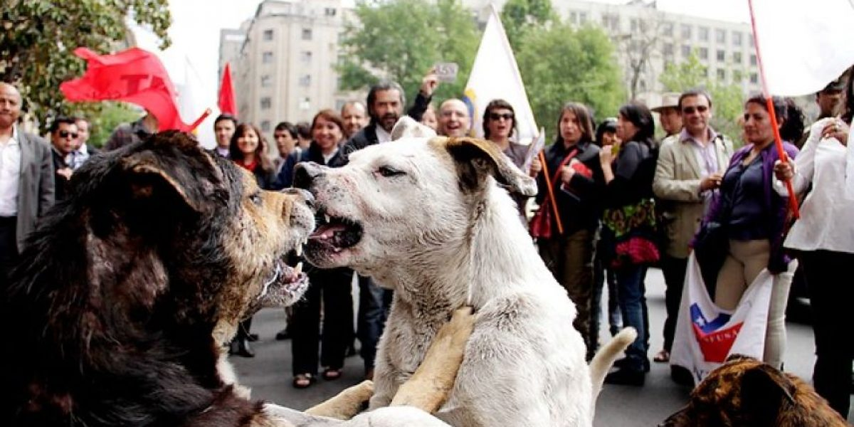 Estos perros protagonizan salvaje pelea en medio de protestas