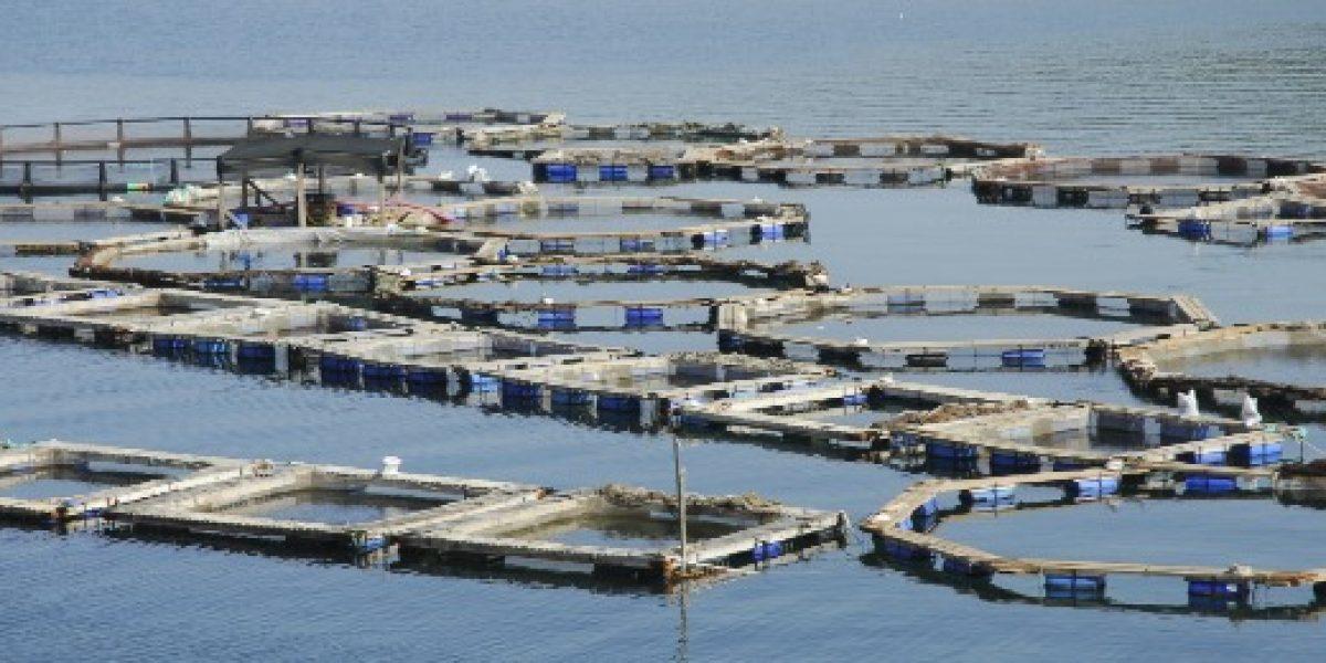 Aysén lidera crecimiento económico regional por aumento de sector pesca