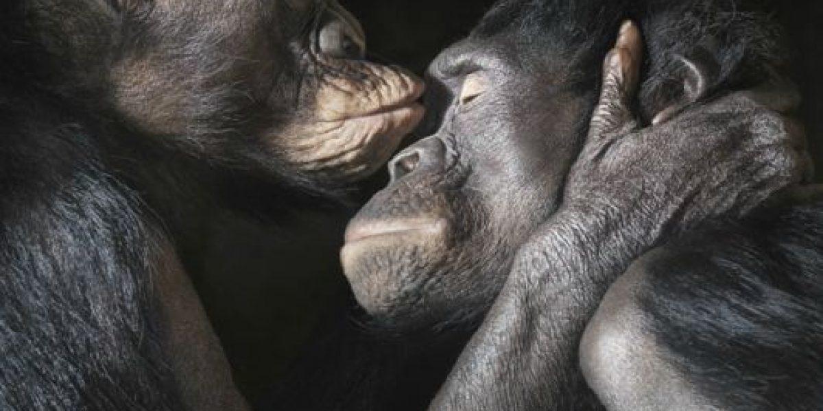 [FOTOS] Fotógrafo retrata a los animales en su momento más